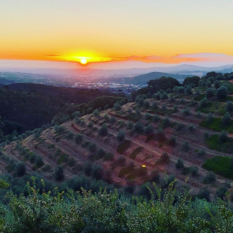 Tokara view